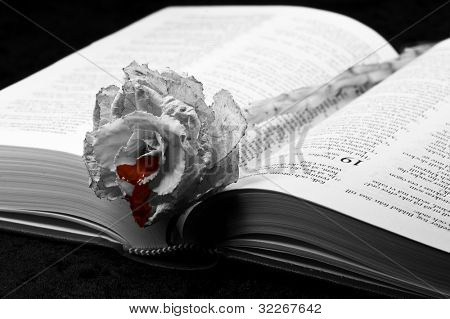 Bleeding old rose on swedish bible, photo in black and white except for the blood.