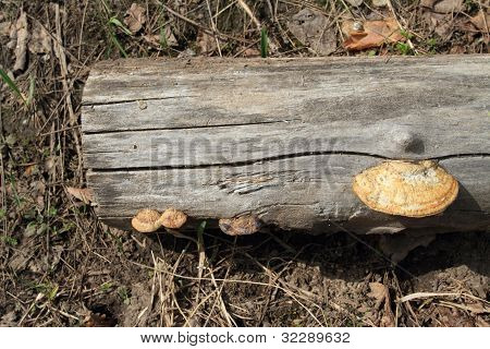 Part Of Stem Old Sawed;sawn Down Tree On Land