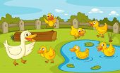 image of duck pond  - IIllustration of a family of ducks at the pond - JPG