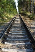 Railway Landscape. The Old Railway In Autumn Forest. Single-track Railroad In The Green Forest poster