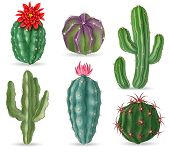 Realistic Cactus. Decorative Desert Cactuses Plants For Mexican Landscape And House Interior. 3d Suc poster