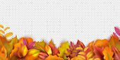 Autumn Banner. Fall Leaves Background. Realistic Vector Autumn Leaves Isolated On Transparent Backgr poster