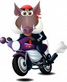 Wild Boar On A Motorcycle