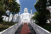 The Bahirawakanda White Buddha Statue Is Located Alongside The Sri Maha Bodhi Temple Which Is On The poster