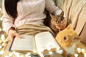 pets, hygge and people concept - close up of red and tabby cat and female owner reading book in bed  poster