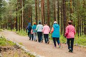 Older Women Go Nordic Walking With Sticks In Coniferous Forest, Concept That Is Good For Fitness poster