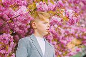 Confident Stylish Child Enjoy Warm Spring Day. Boy Fashionable Teen Posing Near Sakura. Sakura Garde poster