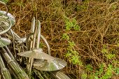 Discarded Chrome Plated Lampposts Laying On In Dried Vegetation On Ground. poster