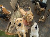 stock photo of stray dog  - A lot of stray dogs in the shelter - JPG