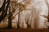 Trail Through A Mysterious Dark Old Forest In Fog. Autumn Morning In Crimea. Magical Atmosphere. Fai poster