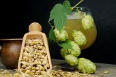 Branch Of Fresh Hops On The Plant And Barley Seeds Spilling From Wooden Scoop Behind Frothy Beer Or  poster