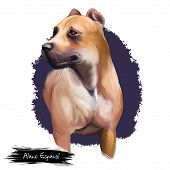 Alano Espanol Breed Digital Art Illustration Isolated On White Background. Cute Domestic Purebred An poster