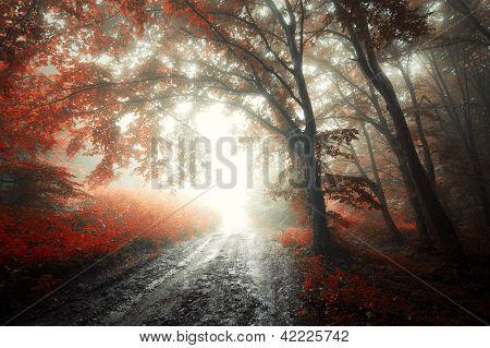Floresta vermelha com nevoeiro no Outono com estrada estranha luz misteriosa