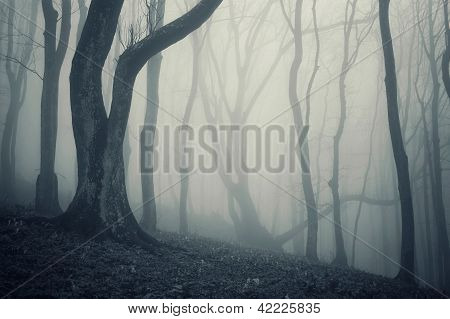 Dark forest with fog and trees, haloween style