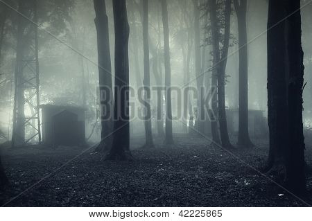 Scene of a dark forest with fog
