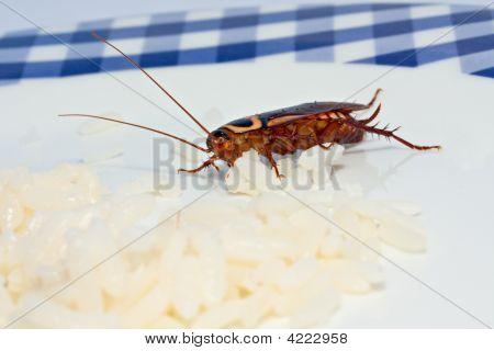 Cockroach Cuisine