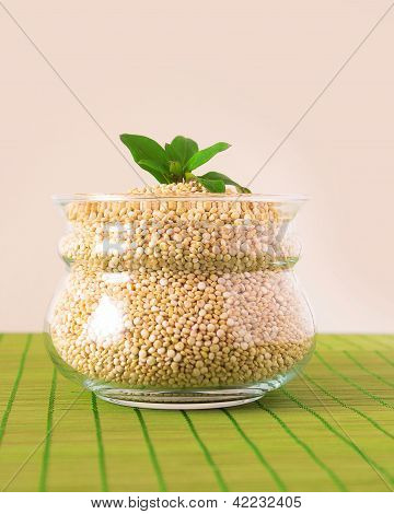Glass Pot Filled With Quinoa