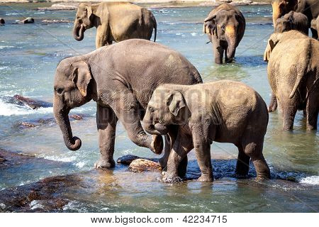 Older Elephant Kicking Young Elephant While Bathing In River