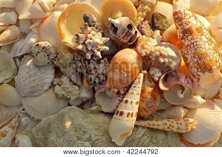 Ocean Shells Background