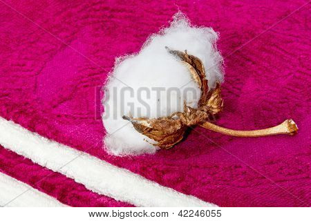 Boll Of Cotton Terry Towels On