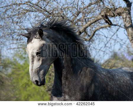 Grey Horse Action Portrait