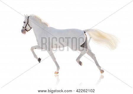 White Running Horse On the white