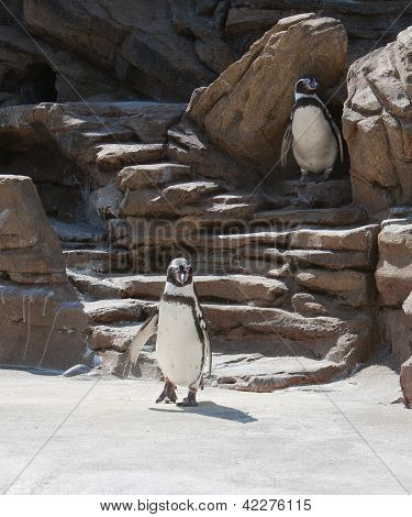 Penguins In The Sunshine