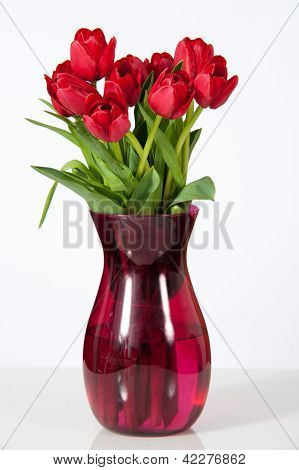 Red Tulips on White