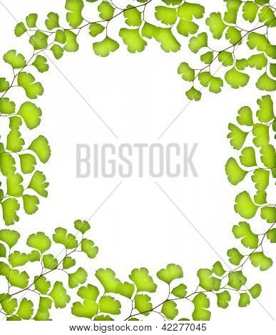 Photo of green leaves frame, fresh tree foliage isolated on white background, copy space, spring season, summer time, holiday greeting card, abstract natural backdrop, floral border
