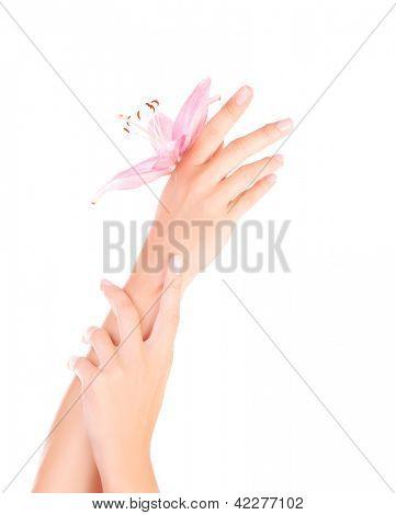 Imagem da belas mãos femininas com flor de lírio rosa, parte do corpo feminino isolado em background branco