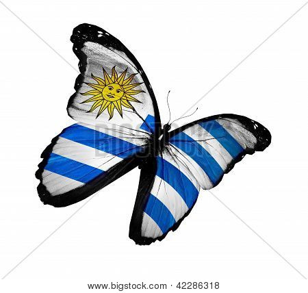 Uruguayan Flag Butterfly Flying, Isolated On White Background