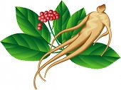 picture of ginseng  - Ginseng root and a part of the plant - JPG