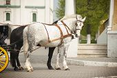 picture of workhorses  - The two horses in carriage standing on a square - JPG