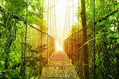stock photo of jungle  - Picture of Arenal Hanging Bridges Ecological reserve - JPG