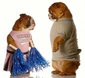 picture of jock  - two english bulldogs dressed up as a cheerleader and a jock  - JPG