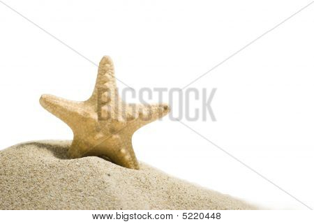 Star Fish With Clipping Path