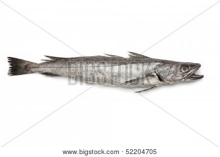 Single fresh Hake fish on white background