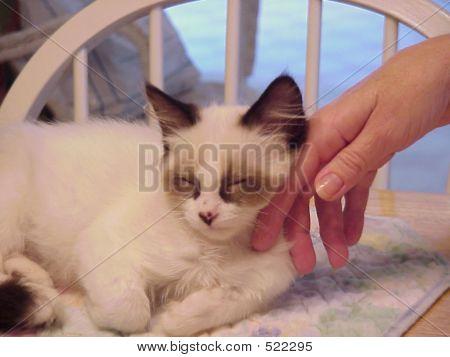 Handcat