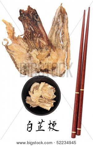 Angelica herb root used in traditional chinese herbal medicine with mandarin title script translation and chopsticks. Dang gui.