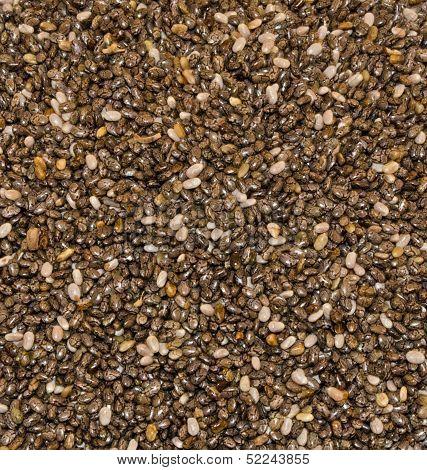 Chia Seeds Close-Up