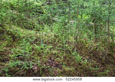 Sapling In Forest
