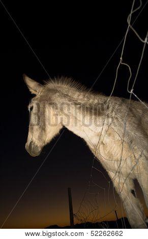 Donkey At Sunset