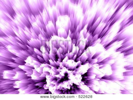 Carnation - Violet