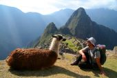 Tourist And Lama In Front Of Machu Picchu