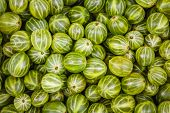 Gooseberries Green Background