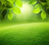 foto of lawn grass  - Spring forest  background - JPG