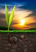 Coconut And Soil With Grass In Sunset Background