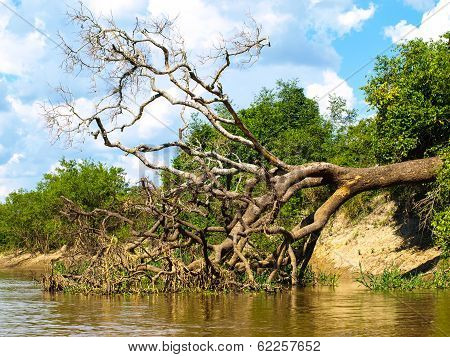 Fallen Tree At Amazonian River Bay