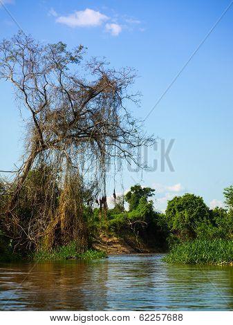 Amazonian River Bay