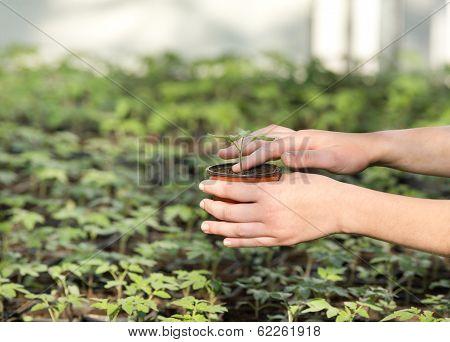 Flowerpot With Seedling